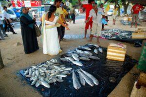 fiskmarknad-galle-sri-lanka