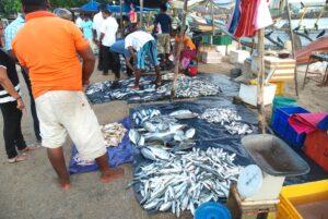 fiskmarknad-galle-sodra-kusten-sri-lanka
