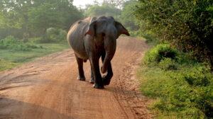 yala-national-park-sodra-kusten-sri-lanka