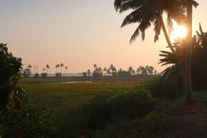 vacker-natur-backwaters-kerala