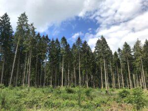 skogen-swartzwald
