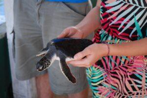 hikkadwuda-turtle-rescue-center