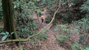 orangutang-vandring-sumatra