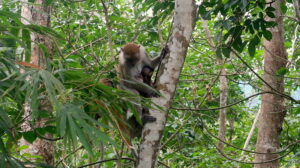apor-nationalpark-sumatra